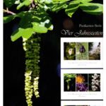 Marburg Botanischer Garde 6  150x150