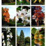 Marburg Botanischer Garden 3 150x150