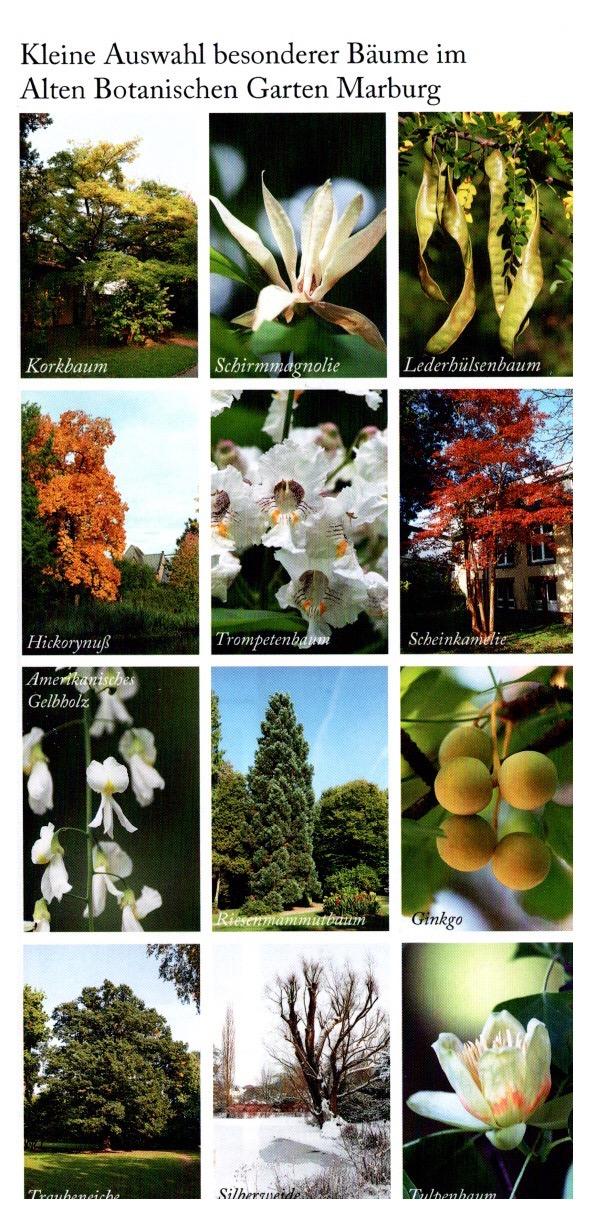 Marburg Botanischer Garden 3