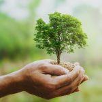 nachhaltig-thumbnail